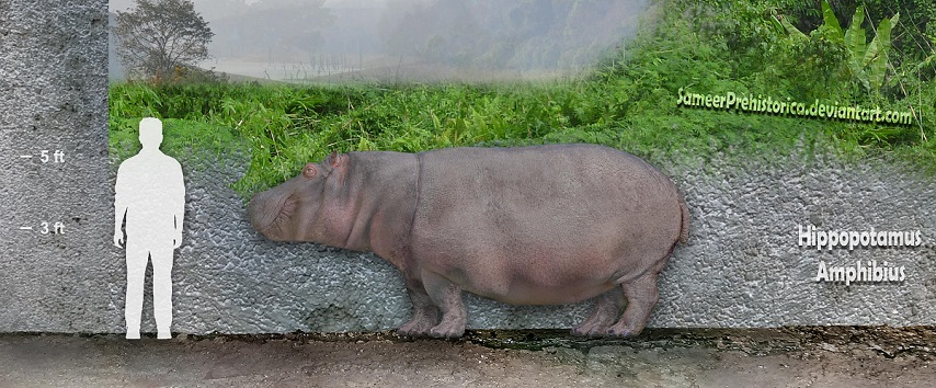 Hippopotamus Amphibius by SameerPrehistorica