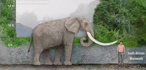 South African Mammoth