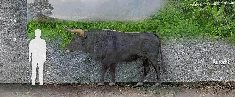 H F Cattle India Aurochs | Dinosaur Hom...