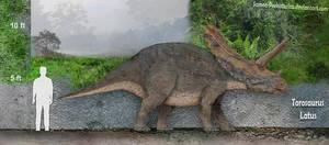 Torosaurus Size