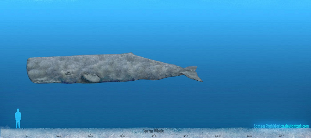 Sperm Whale by SameerPrehistorica on DeviantArt