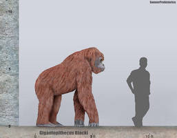 Gigantopithecus Size by SameerPrehistorica
