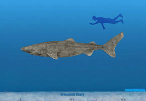 Greenland Shark Size by SameerPrehistorica