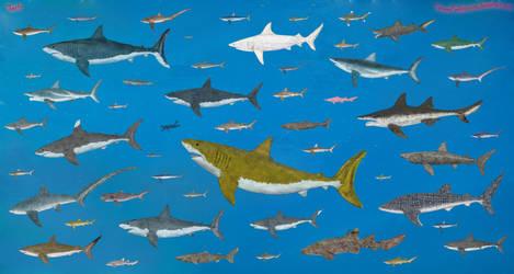 Sharks size by SameerPrehistorica