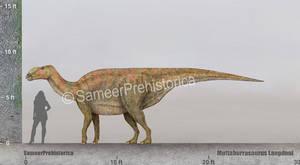 Muttaburrasaurus Size