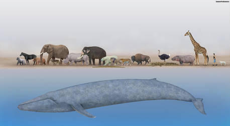 Animals Size Comparison by SameerPrehistorica