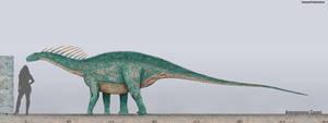 Amargasaurus Size