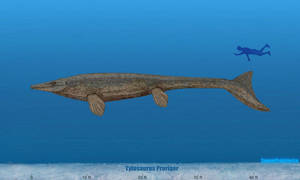 Tylosaurus Size