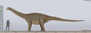 Saltasaurus Size