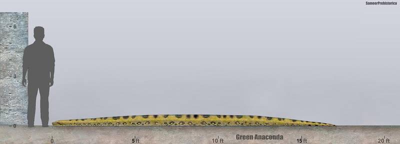 Anaconda Size