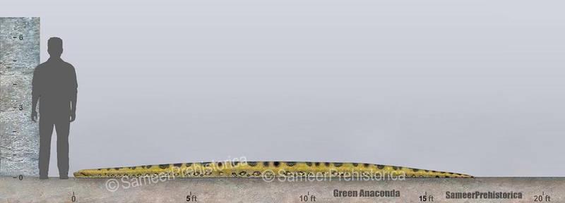 Anaconda Size Comparison