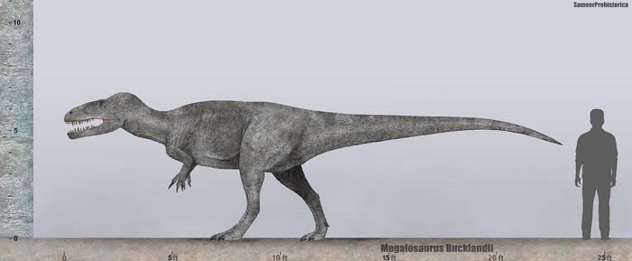 Megalosaurus Size by SameerPrehistorica