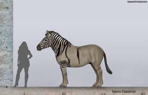 Equus Capensis Size by SameerPrehistorica