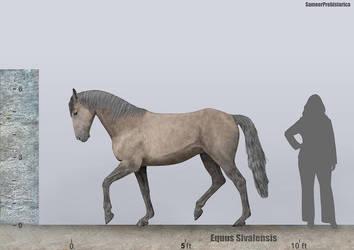 Equus Sivalensis Size by SameerPrehistorica