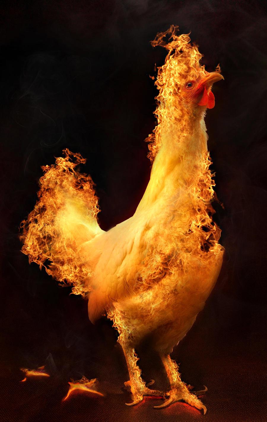 fire chicken by flipflopninja on deviantart