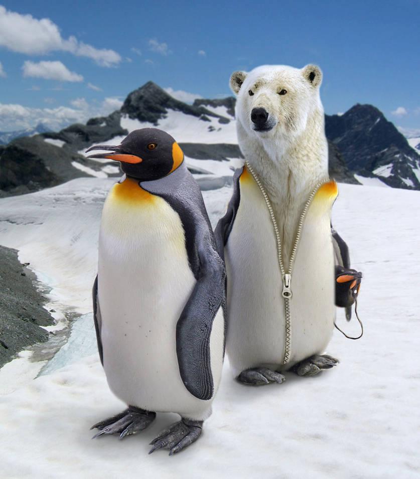 Про, доброе утро в январе с пингвинами картинки