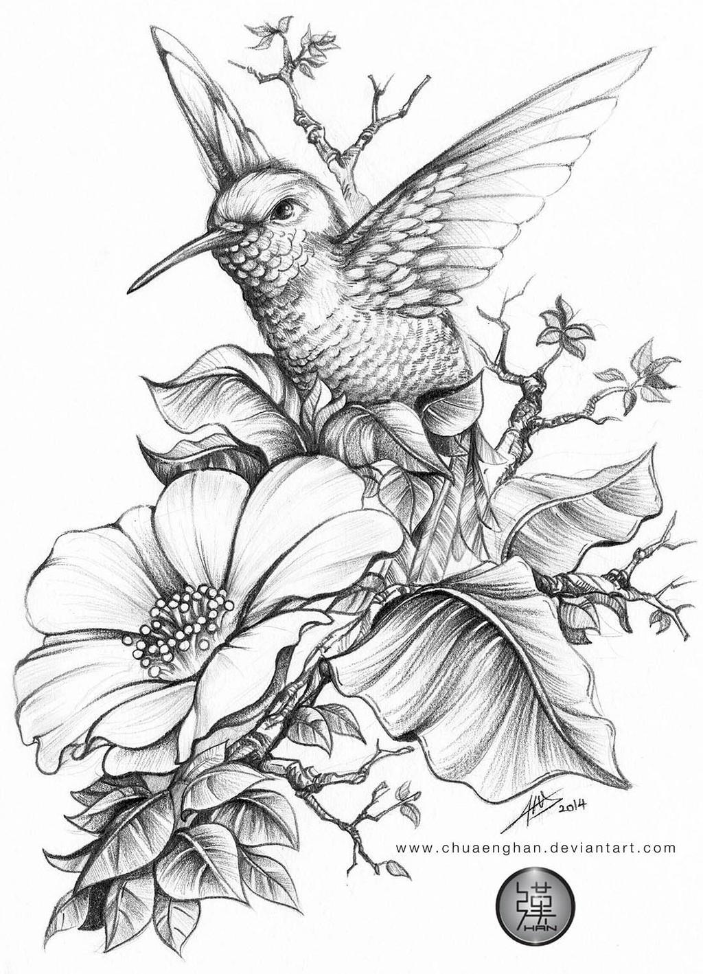 Hummingbird by chuaenghan on DeviantArt