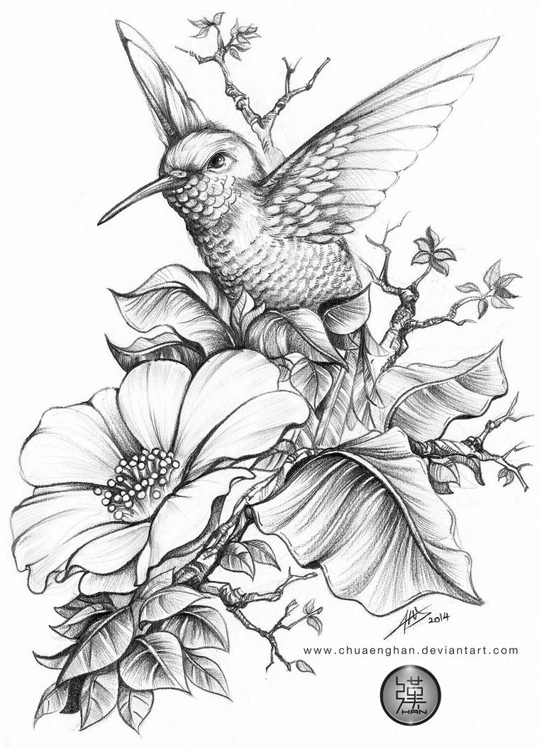 Hummingbird by chuaenghan on DeviantArt