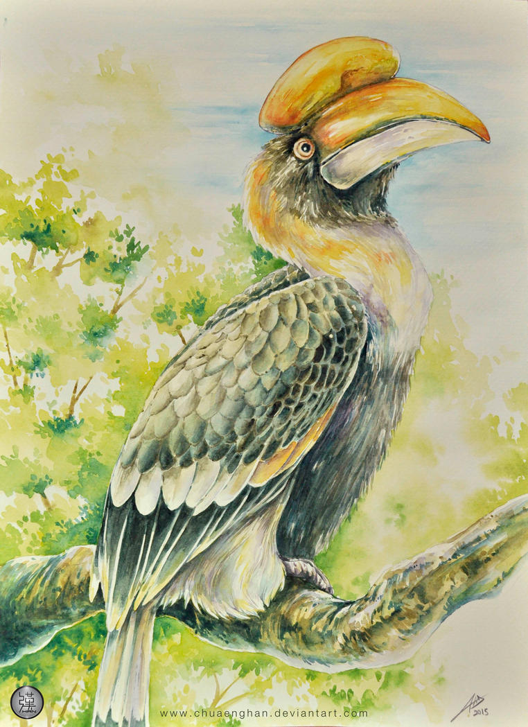 Hornbill watercolor by chuaenghan