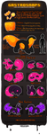 [OUTDATED] GASTROSNAPS - Species Guide by Skelefrog