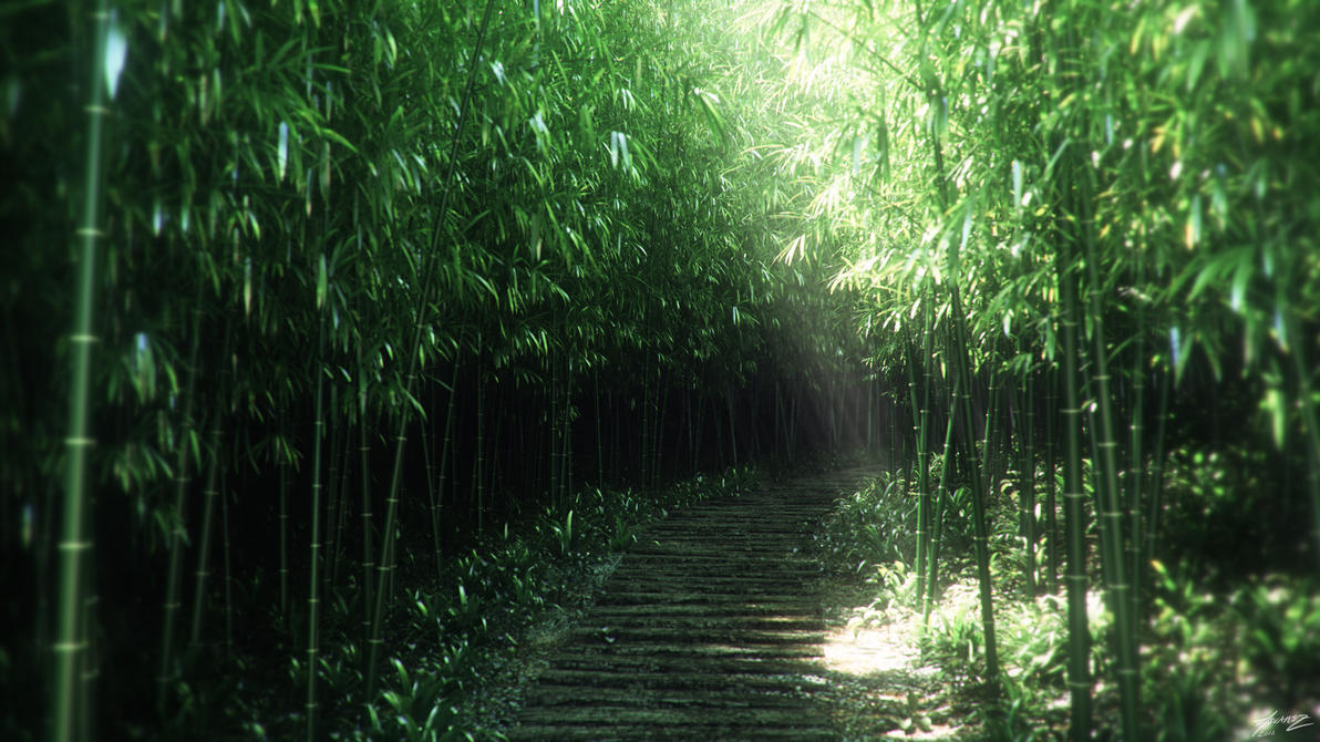 Bamboo 1 by alexalvarez
