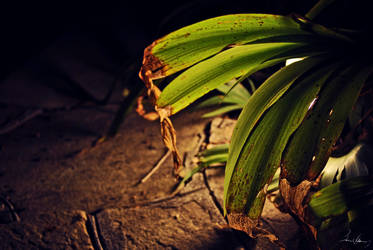 Decaying Leaves by javb1545