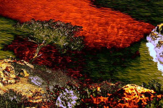 Dans l'eau translucide on voit le corail