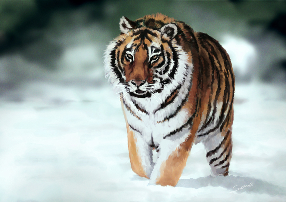 Tigre Siberiano By Edersuria On DeviantArt