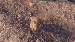 Animal - Far Cry 6 (Photomod PS5).