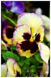 Multi Coloured Flower