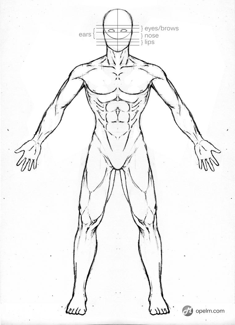 Male Anatomy Drawing Model Front By Gourmandhast On Deviantart