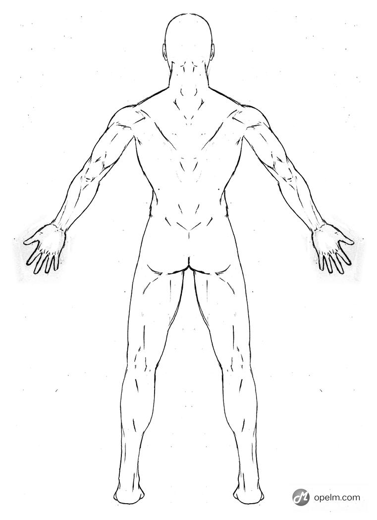 Back Body Diagram Outline Schematics Wiring Diagrams Blank Human Male Anatomy Drawing Model By Gourmandhast On Coloring Page Medical