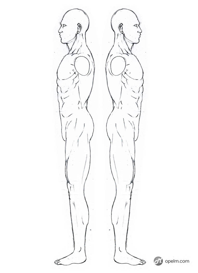 Male Anatomy Drawing Model Side By Gourmandhast On Deviantart
