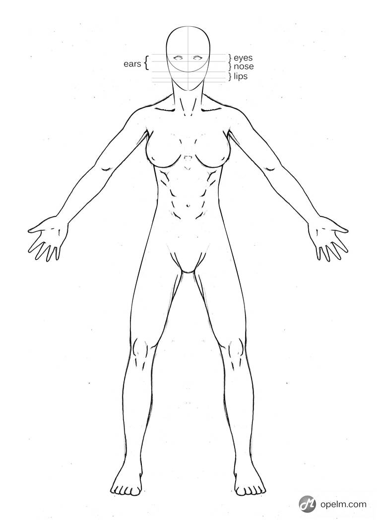 Female Anatomy Drawing Model Front By Gourmandhast On Deviantart