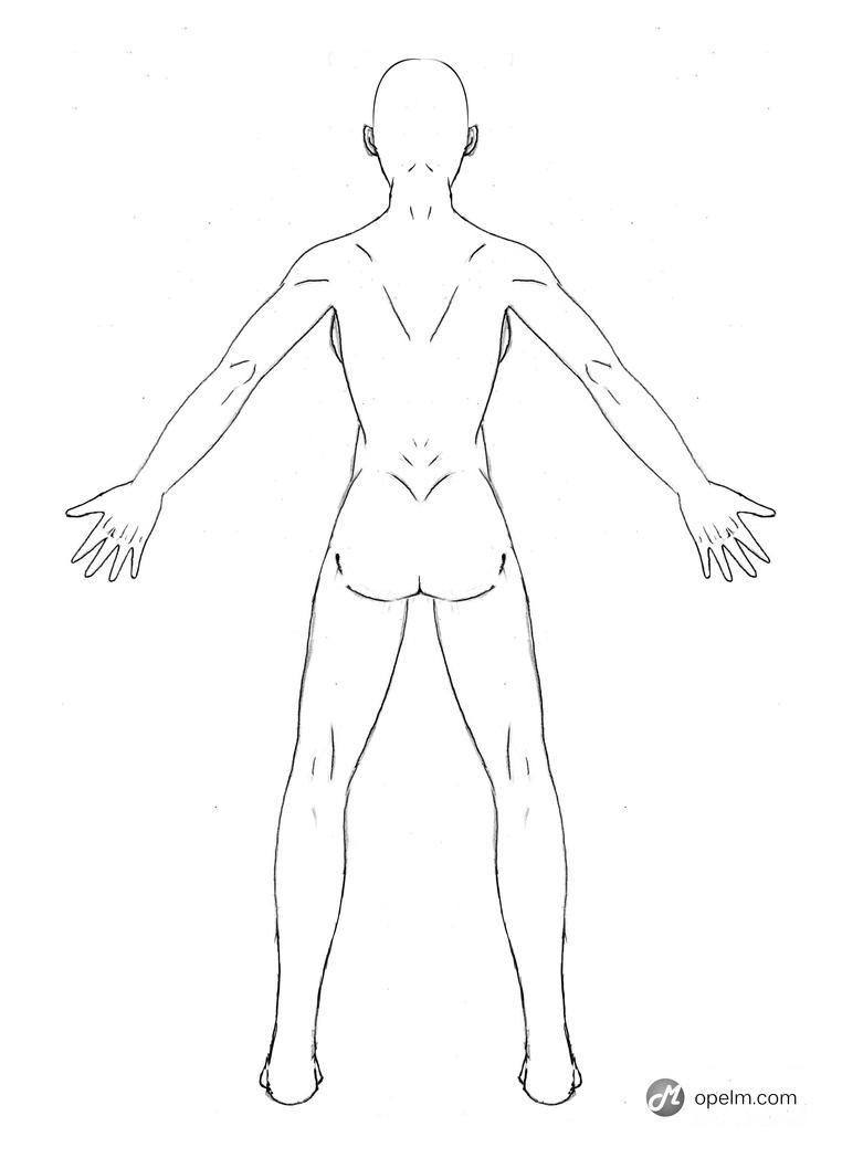 It's just an image of Nerdy Women Anatomy Drawing