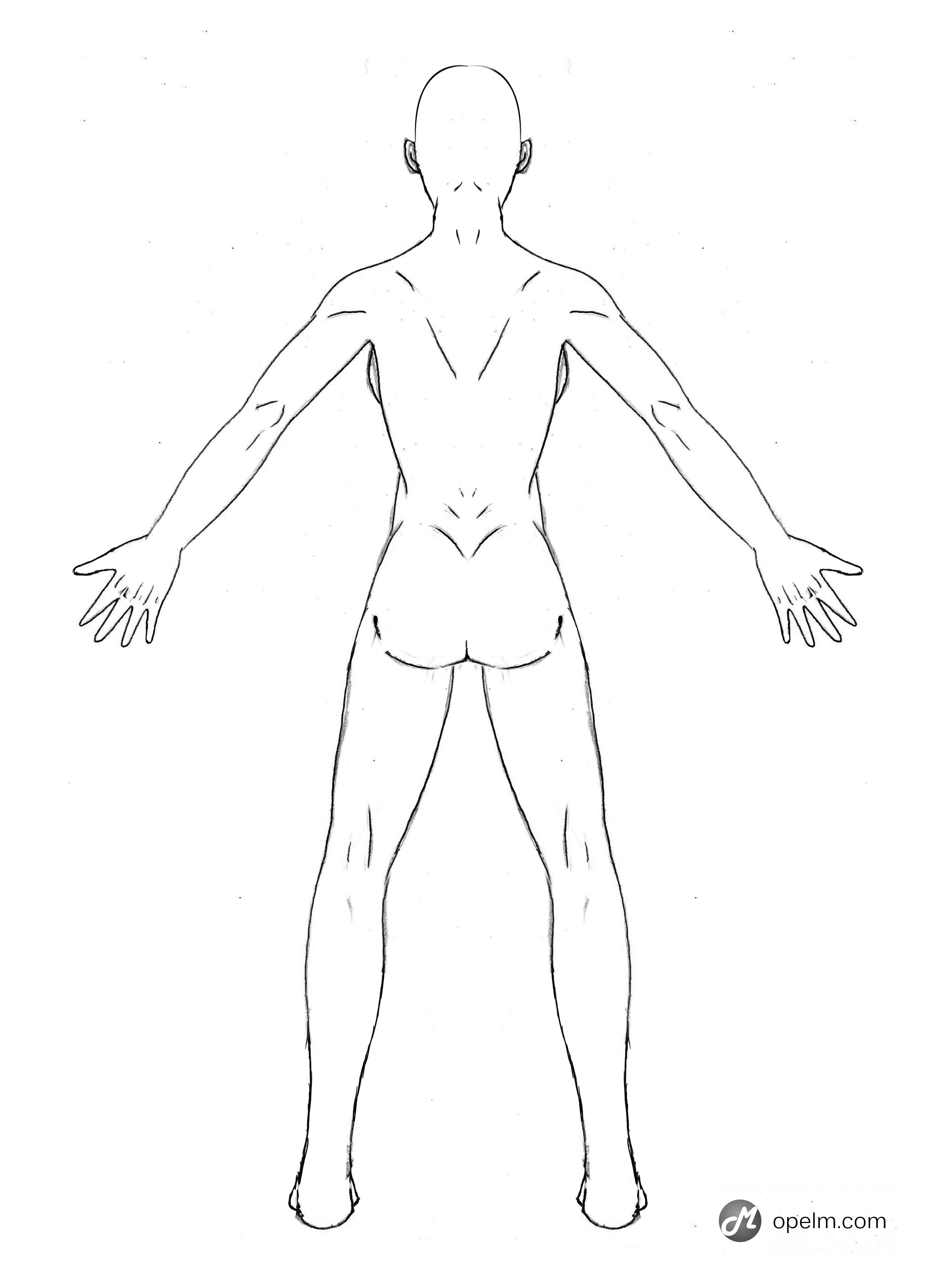 how to draw male anatomy