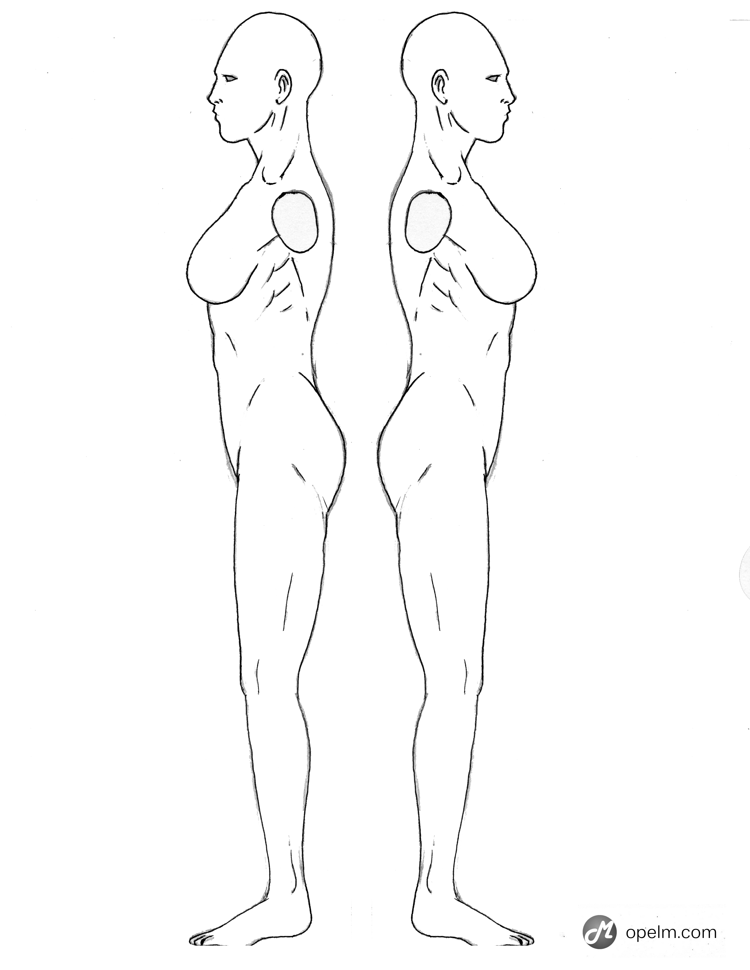 Female Anatomy Drawing Model - Side by Gourmandhast on DeviantArt