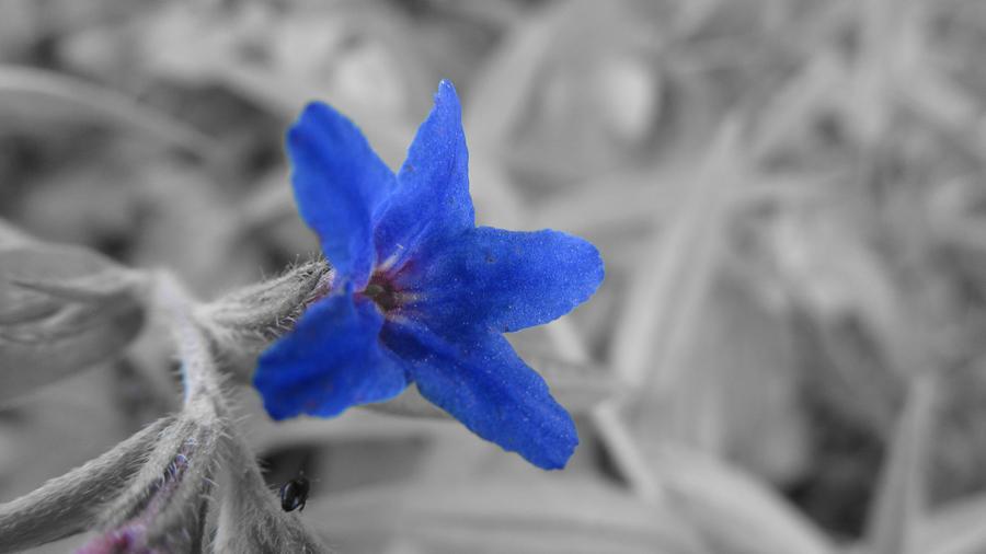 Razbijemo monotoniju bojom - Page 3 Wild_flower_10_by_rautagd-d3hoc69