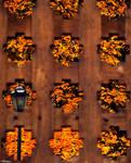 Autumn behind the gates...