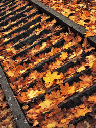 On steps of autumn by inDeevid