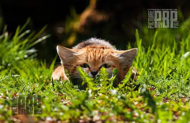 shhh I am hunting wabbit