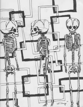 Fetal Skeletons