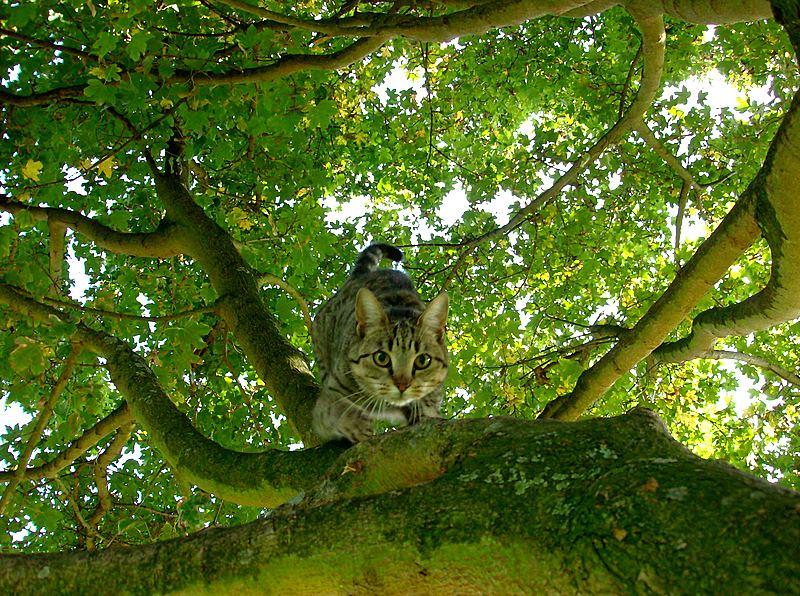 http://fc03.deviantart.net/fs19/f/2007/289/3/f/Cat_in_a_Tree__by_Elle_Michelle.jpg