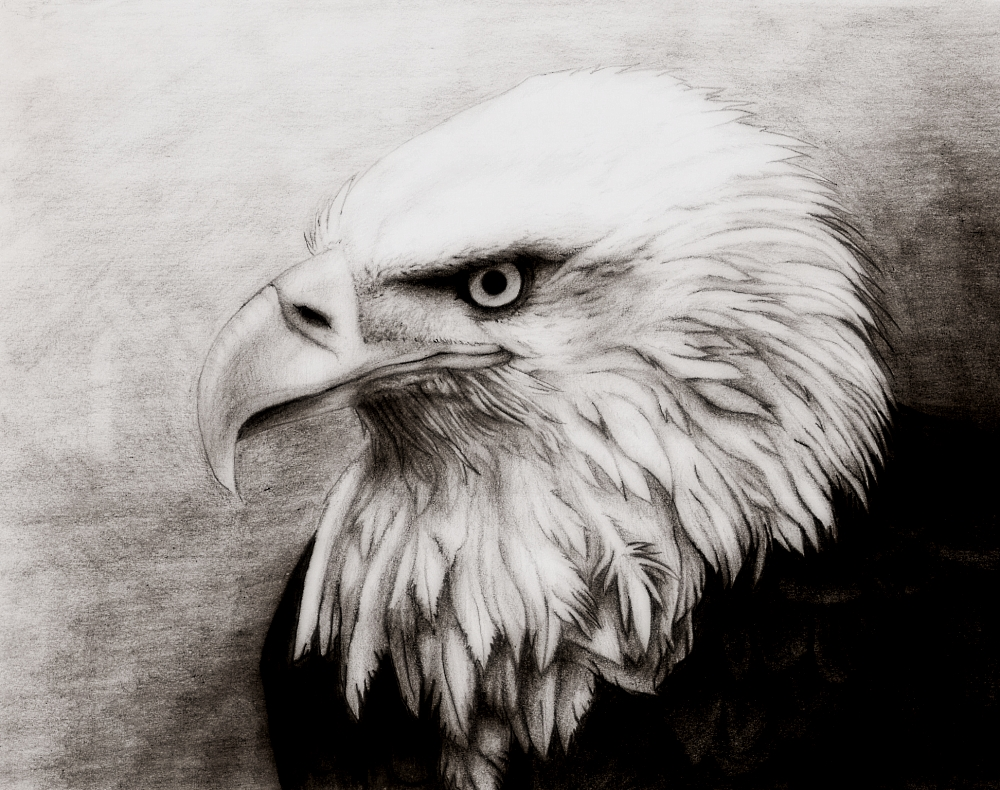 how to draw a realistic eagle head