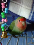 Lovebird with Purple Bell