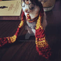 Harry Paca 1 by pixipatrin