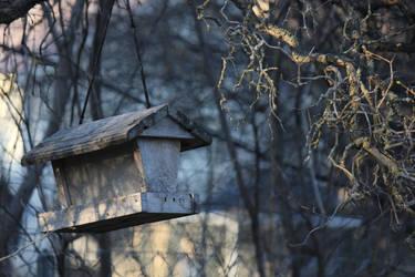 Bird Feeder by catbehaviors
