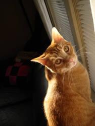 Sunshine kitty by catbehaviors