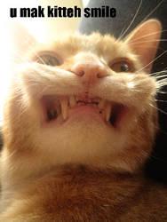 U MAK KITTEH SMILE by catbehaviors