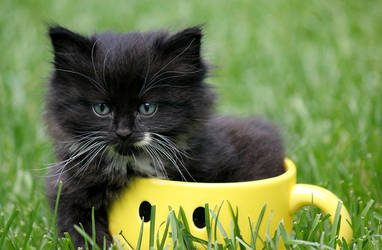 Kish Kish in a cup by catbehaviors